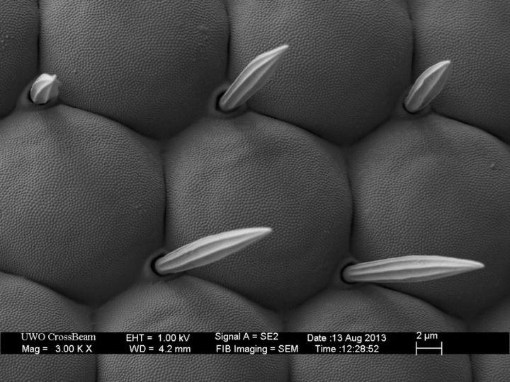 Под электронным сканирующем микроскопом (22)