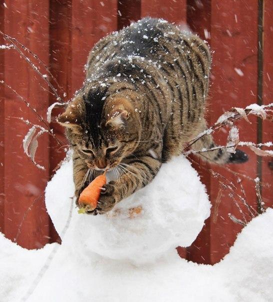 Голод не тётка или коты-воришки (1)