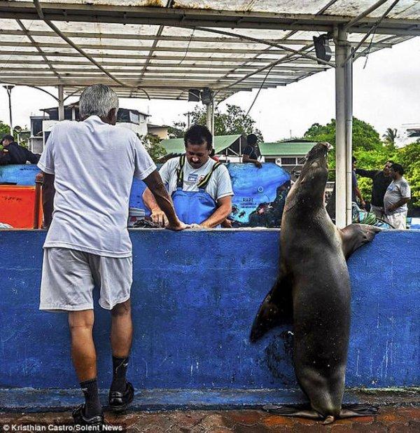 Необычный посетитель рыбного базара (5)