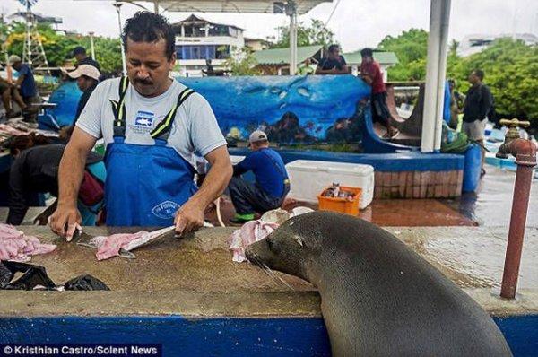 Необычный посетитель рыбного базара (7)