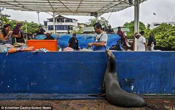 Необычный посетитель рыбного базара (6)