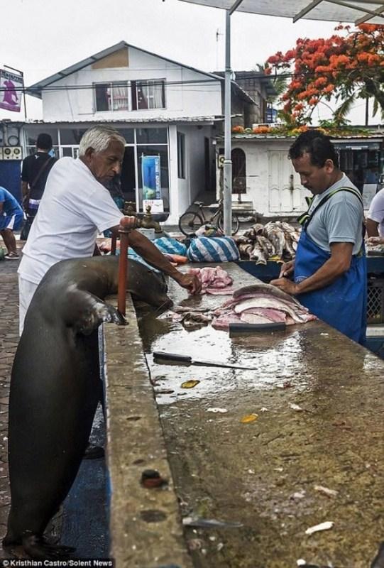 Необычный посетитель рыбного базара (4)