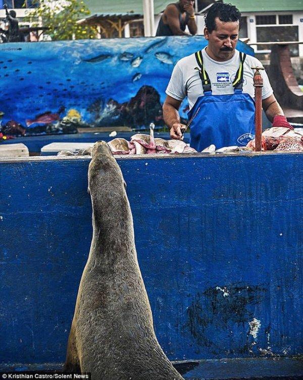 Необычный посетитель рыбного базара (3)
