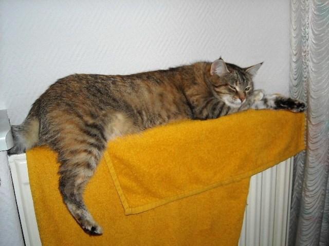 Кошки на батарее (23)