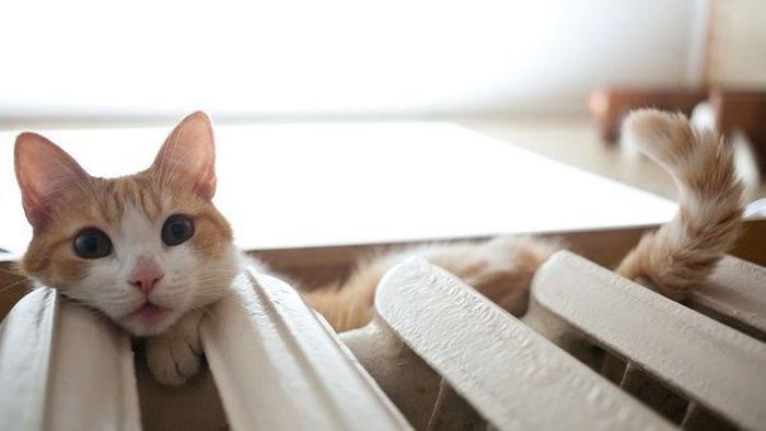 Кошки на батарее (19)