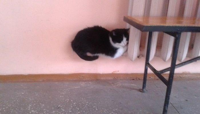 Кошки на батарее (18)