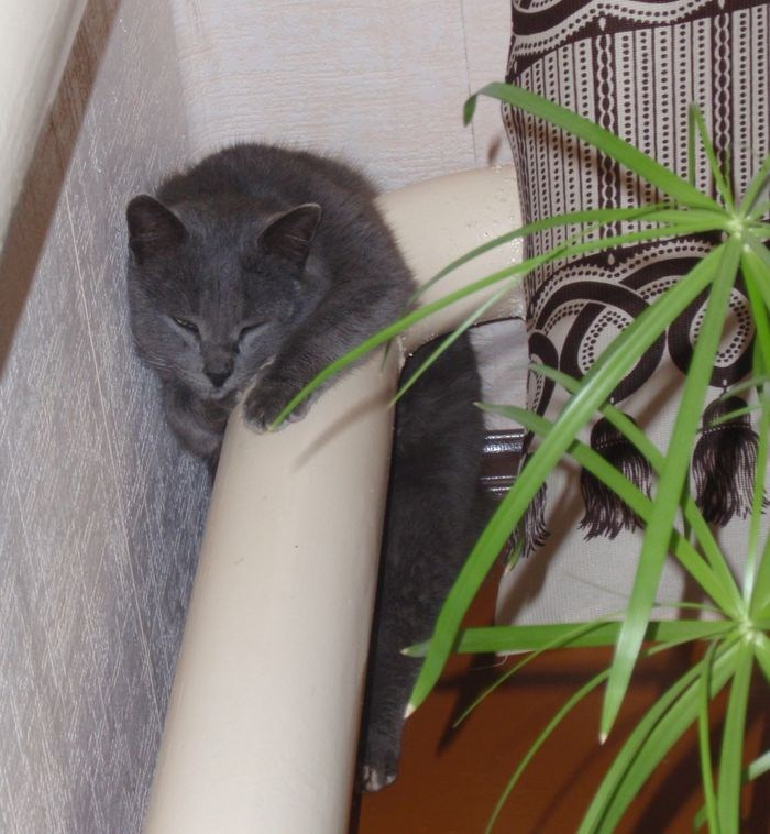 Кошки на батарее (13)