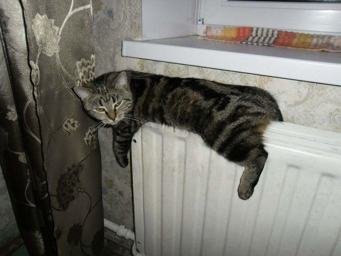 Кошки на батарее (11)