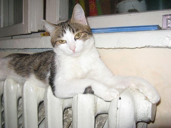 Кошки на батарее (7)