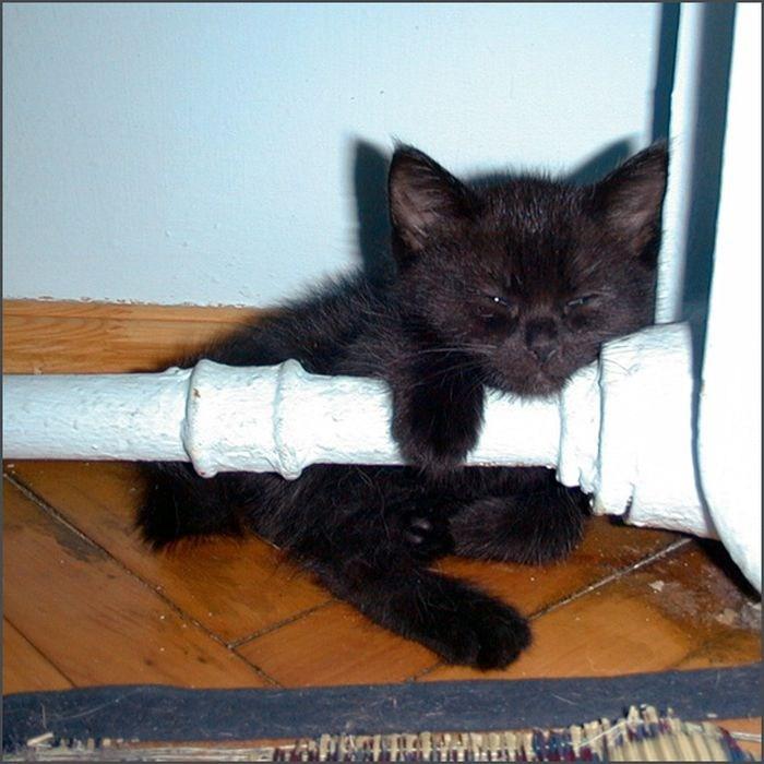 Кошки на батарее (4)