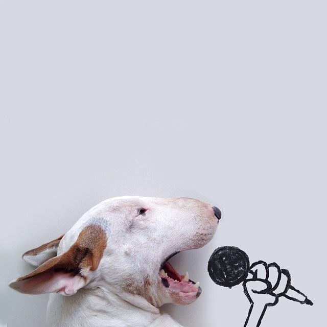 Бультерьер - забавная собака с особым нравом (8)