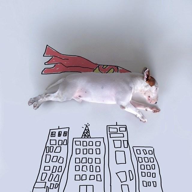 Бультерьер - забавная собака с особым нравом (5)