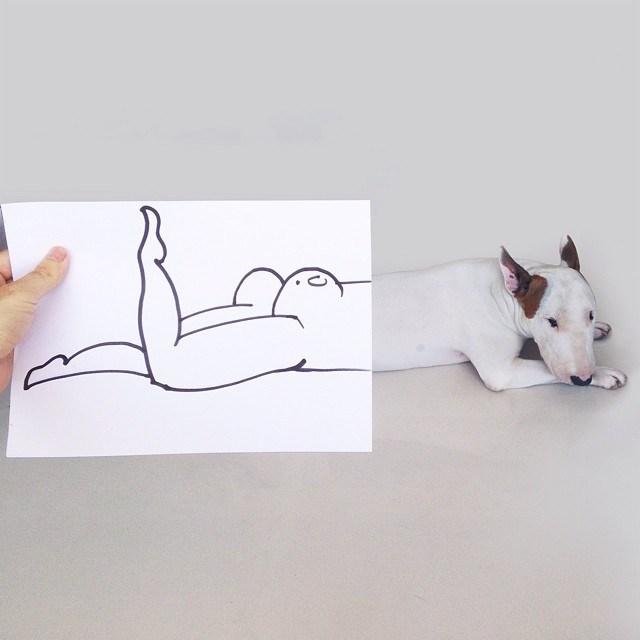 Бультерьер - забавная собака с особым нравом (4)