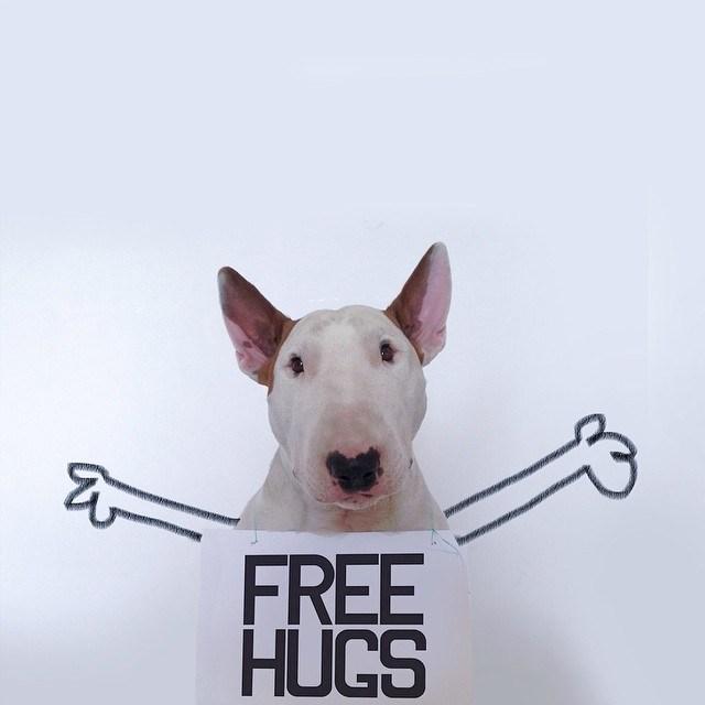 Бультерьер - забавная собака с особым нравом (1)