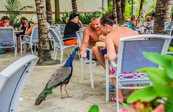 10 интересных фактов о Доминиканской Республике (3)