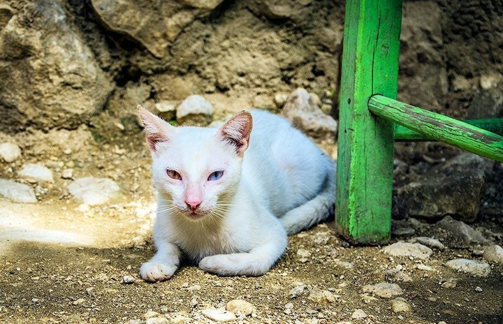 10 интересных фактов о Доминиканской Республике (5)