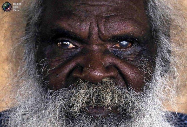Как живут австралийские аборигены Йолнгу (7)