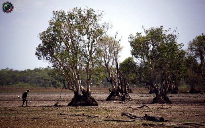 Как живут австралийские аборигены Йолнгу (11)