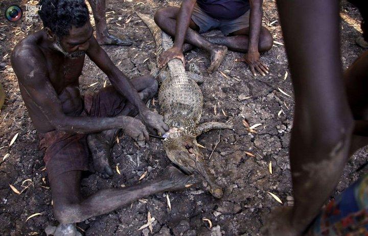 Как живут австралийские аборигены Йолнгу (21)