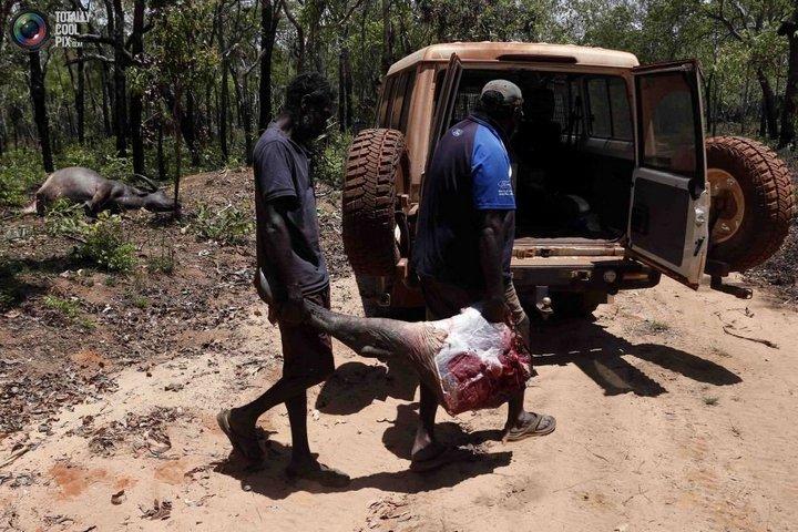 Как живут австралийские аборигены Йолнгу (30)