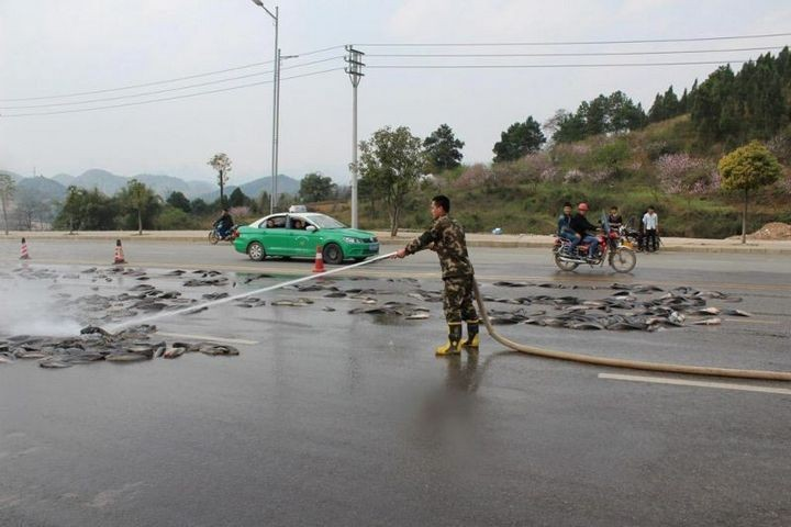 В Китае из грузовика выпало семь тонн рыбы (6)
