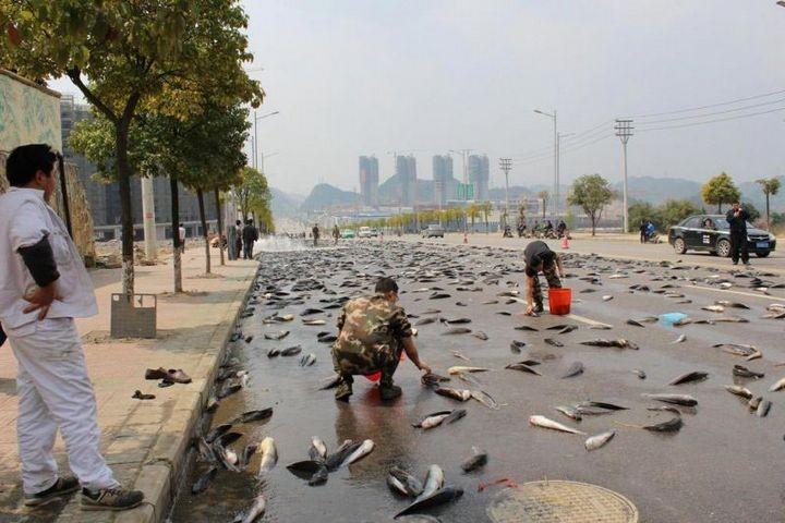 В Китае из грузовика выпало семь тонн рыбы (4)