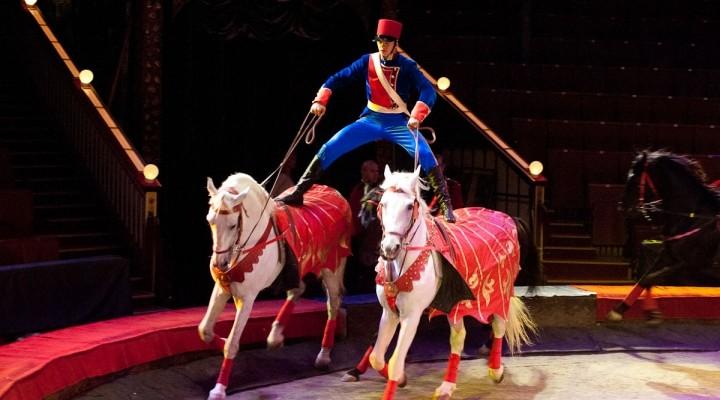 Яркое событие в мире цирка – фестиваль «Идол» (4)
