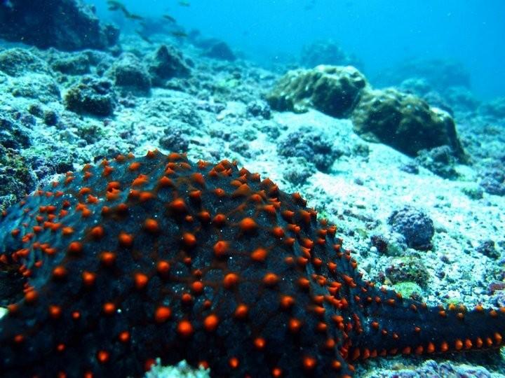 Интересные факты о морских звездах (10)
