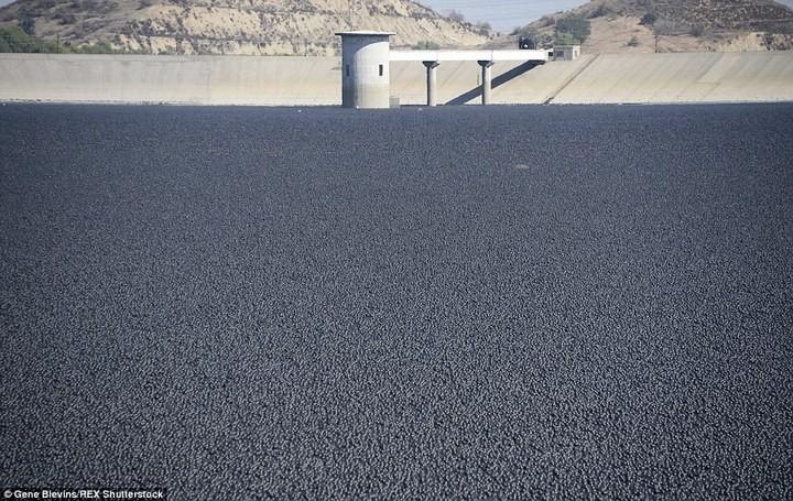 Гигантское покрывало из 96 миллионов черных шаров (2)