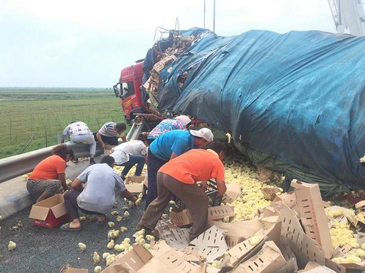В Китае опрокинулся грузовик с цыплятами (2)