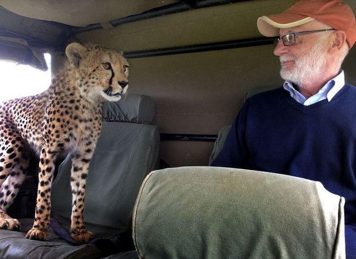 Экстремальное сафари с гепардами (4)