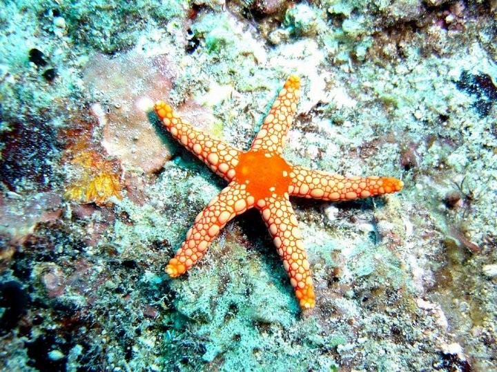 Интересные факты о морских звездах (4)