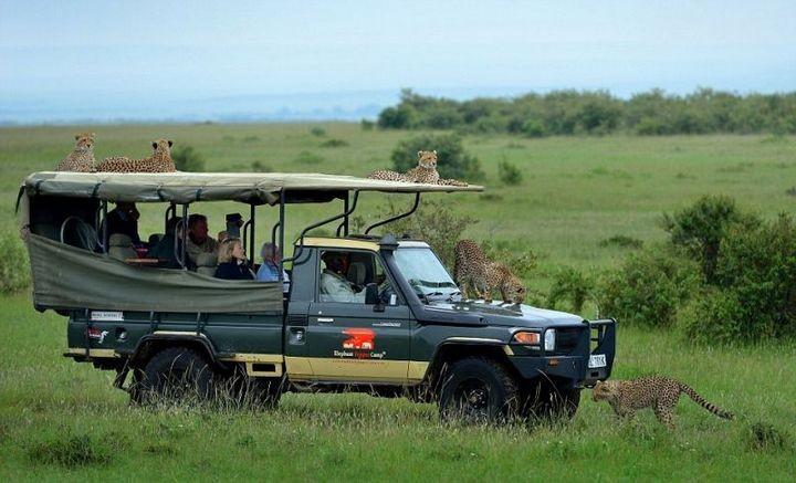 Экстремальное сафари с гепардами (6)