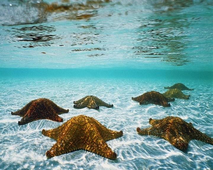 Интересные факты о морских звездах (6)