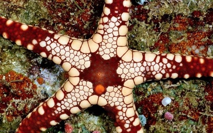 Интересные факты о морских звездах (8)