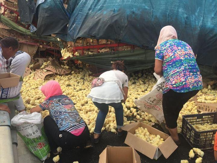 В Китае опрокинулся грузовик с цыплятами (8)