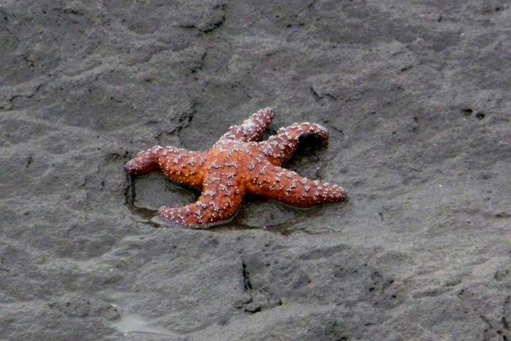 Интересные факты о морских звездах (9)
