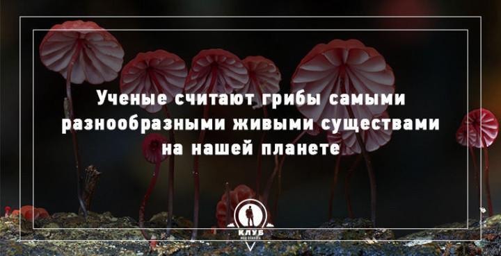 Интересные факты о грибах (10)