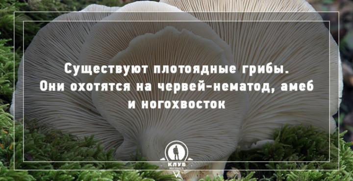 Интересные факты о грибах (1)
