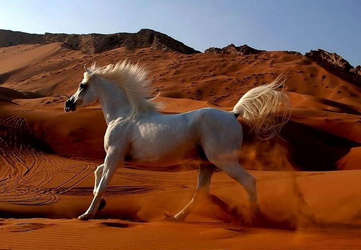 Интересные факты о лошадях (10)