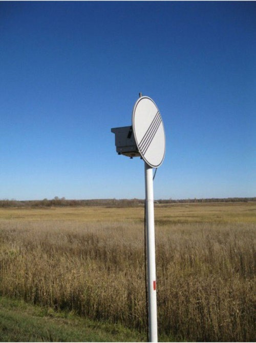 Где прячут радары хитрые ГАИшники (7)