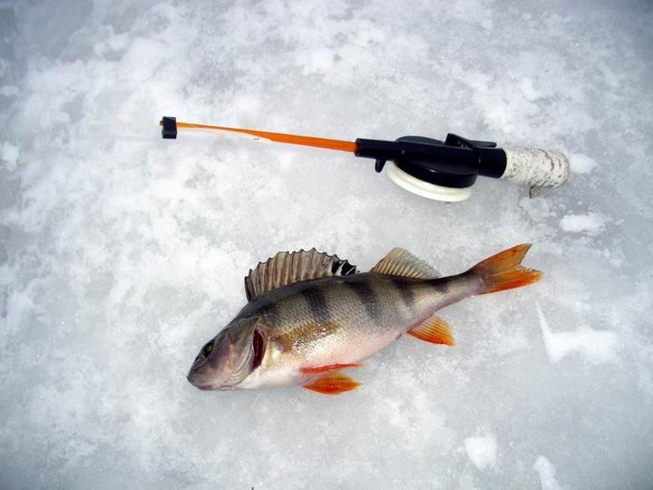 Что нужно знать, выбирая товары для зимней рыбалки (4)