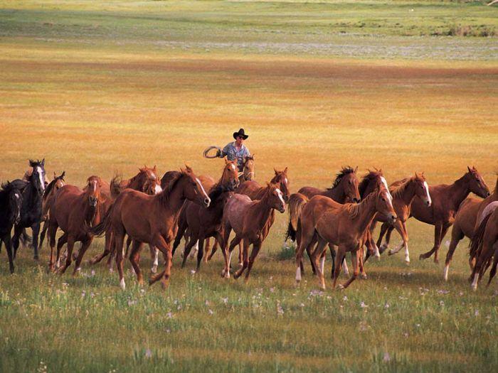 Интересные факты о лошадях (3)