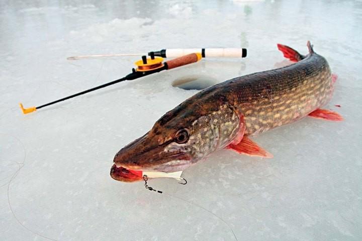 Что нужно знать, выбирая товары для зимней рыбалки (2)