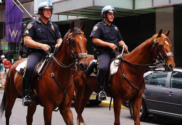 Интересные факты о лошадях (4)