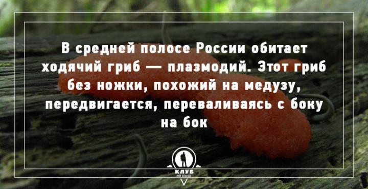 Интересные факты о грибах (6)