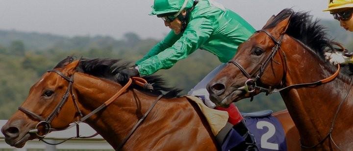 Интересные факты о лошадях (8)