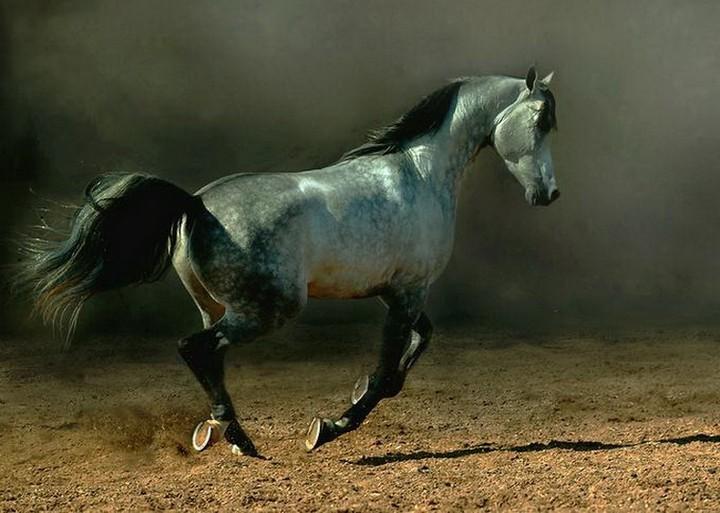 Интересные факты о лошадях (9)
