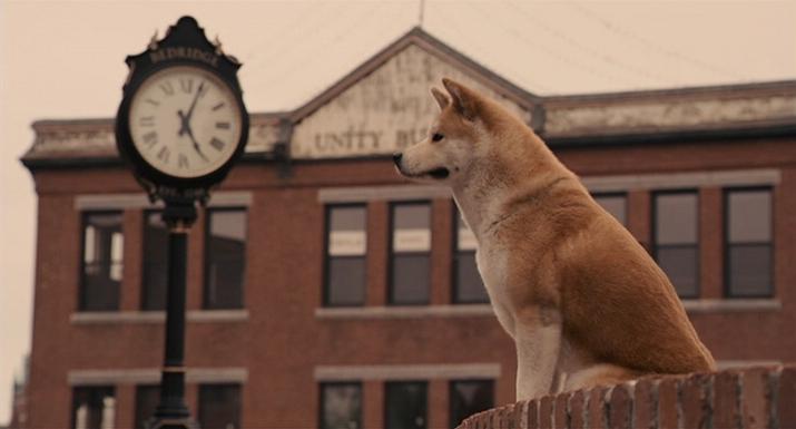 О грустных фильмах про животных (1)