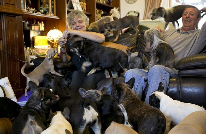 41 собака в доме, как вам? (1)